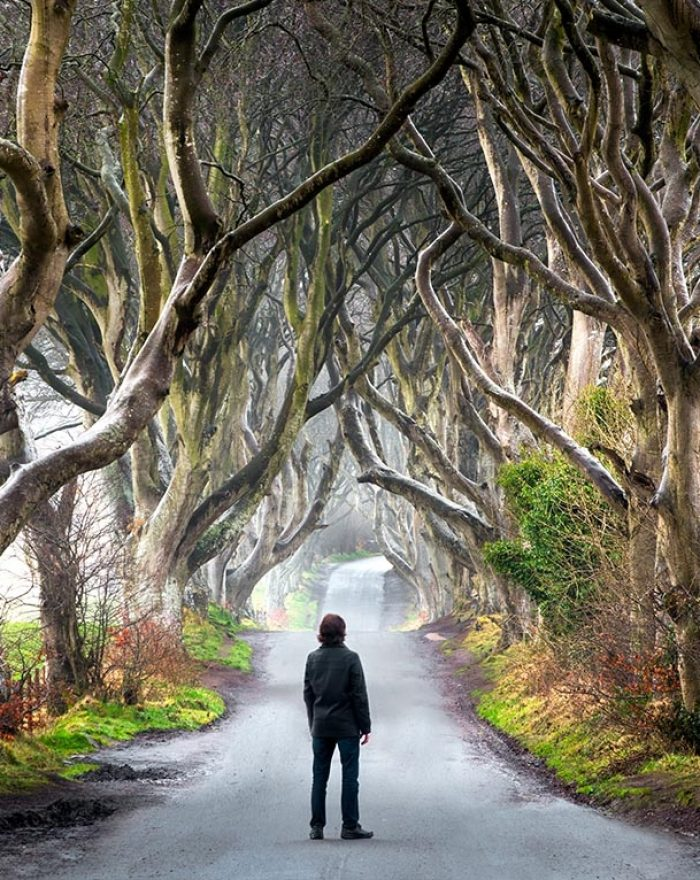 Dark Hedges Northern Ireland